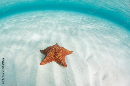 Leinwanddruck Bild Caribbean Sea and Starfish
