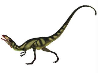 Dilong Dinosaur on White