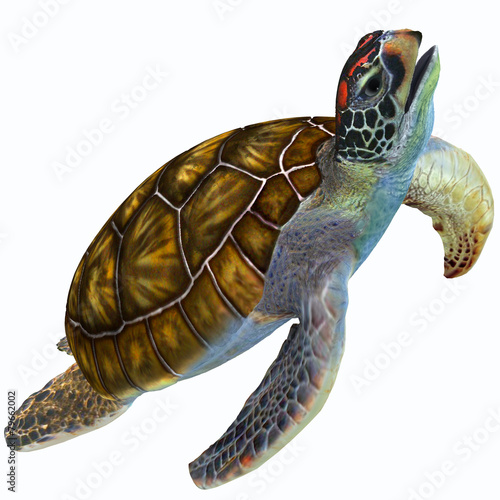 Leinwanddruck Bild Green Sea Turtle Profile