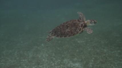 Sea Turtles Three Shots