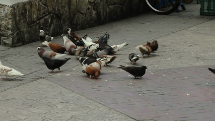Pigeons Feeding Mexican Park
