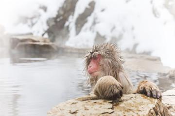 露天風呂を独占して満足のニホンザル Japanese monkey which relaxes in a hot spring