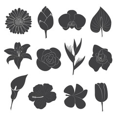 Flower Icons Set