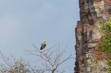 Stork bird on the branch of dead tree