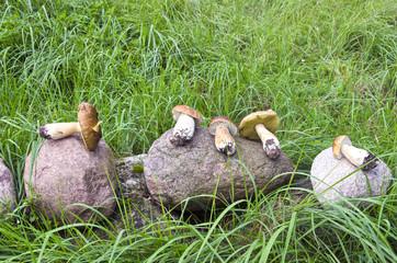 mushrooms cep boletus on stone