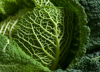 Savoy cabbage close up texture