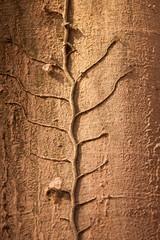 Efeugewächs am Baum