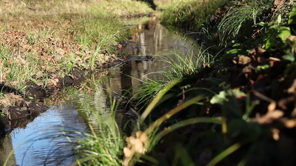 Autumnal Small Water Stream