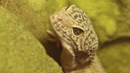 Breathing Reptile