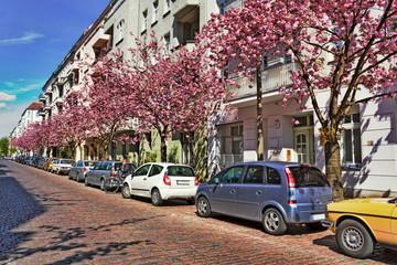 Straße mit Kirschblüte