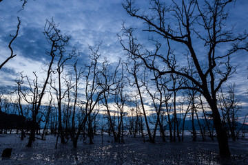 Dead forest at muddy beach at twilight
