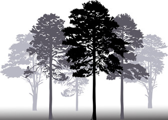 pine forest silhouettes isolated on white