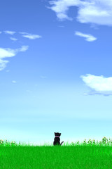 A grassy plain and black cat. 黒猫がいる草原