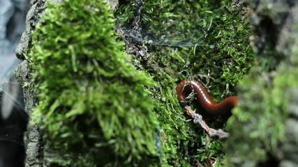 Milipede on Tree