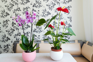Live potted plants in pots at  interior