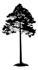Pine Tree Black Silhouette