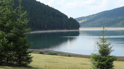 Water Dam Lake and Forest