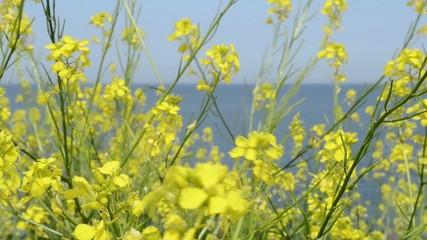 Yellow Small Flowers near Sea