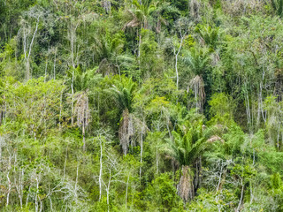 trees in the jungle in south america