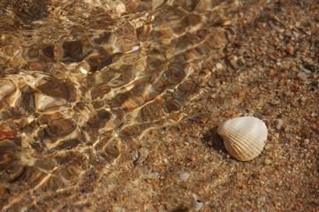 piccola conchiglia sul bagnasciuga della spiaggia