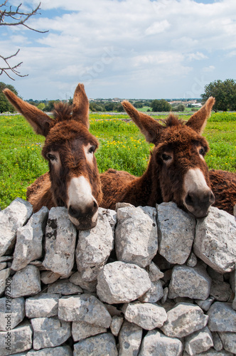Staande foto Ezel Donkey on the farm