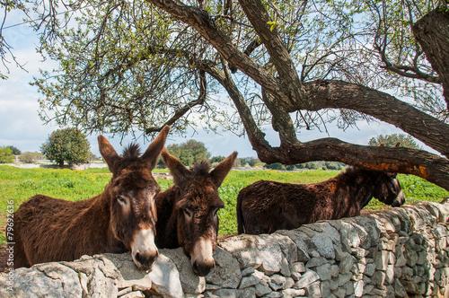 Poster Ezel Donkey on the farm