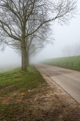 Row of leafless trees in the mist