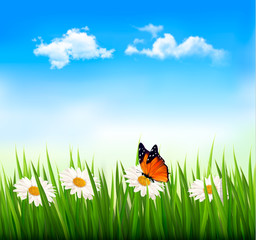 Nature background with green grass, flowers and a butterfly.