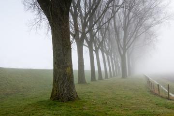 Row of leafless trees beside a dike