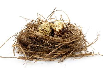 Quail nest