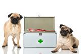 Erste Hilfe beim Hund - 79698452