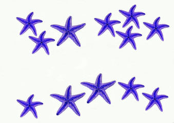 blue sea stars on white background