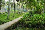 Path among lush tropical thickets, Kerala, India.