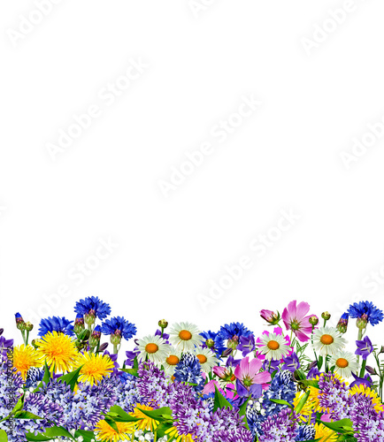 Foto op Canvas Iris flowers isolated on white background