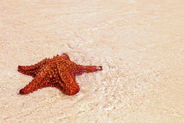 roter Seestern liegt im Sand