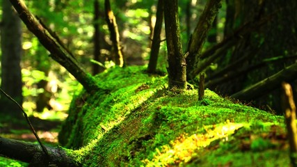 4k time lapse moss on a tree