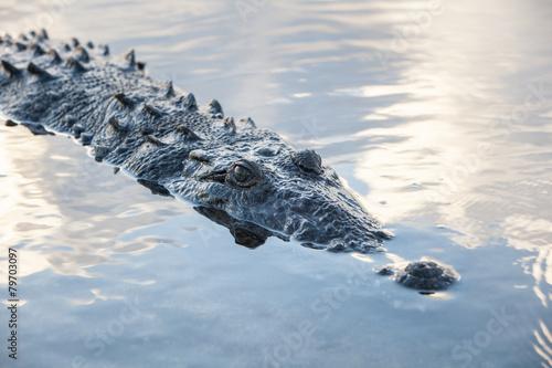 Foto op Plexiglas Krokodil Crocodile at Surface