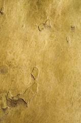 Natural texture tree bark