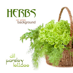 Herbs: dill, parsley, lettuce