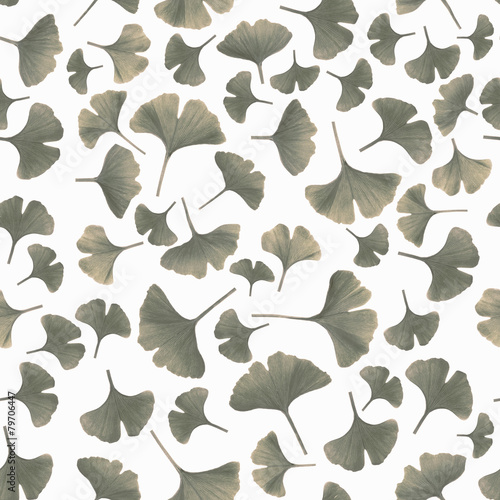 Tinted gingko leaves on white background © tilialucida