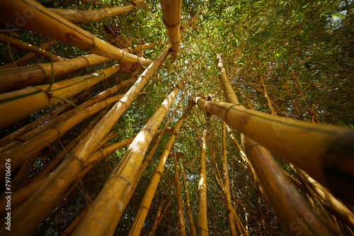 In de dag Bamboo bamboo thickets in Vietnam