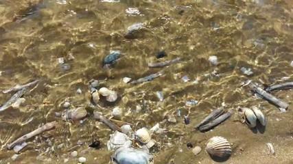 filet d'eau de mer à marée basse