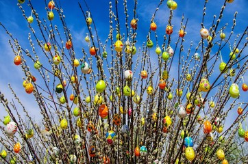 Osterstrauch Weide - easter shrub willow 01
