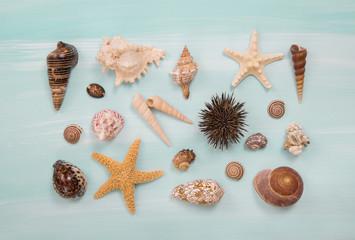 Sammlung von Muscheln und Seesternen: maritime Deko