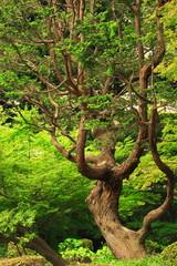 変わった形の樹