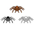 Coloring book Tarantula cartoon character - 79716053