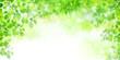 葉 新緑 背景 - 79717897