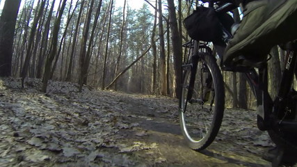 Bicycle walk on the wood. POV clip rear view