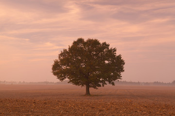 Memorial tree on a empty field