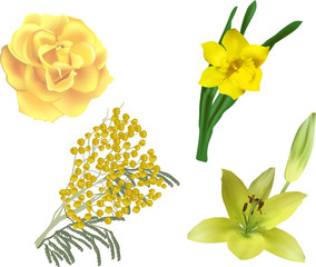 set of four yellow flowers isolated on white